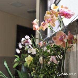 hoa nho